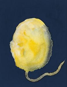 Espora infinita, 2018 Acrílico sobre tela, 35 x 27 cm